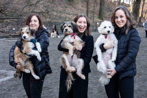 Особенности NYP - воссоединение техасской собачьей семьи
